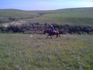 Experience the Flint HIlls, by car, on foot or on horseback. Ask for details when you book your lodging at Matfield Station.